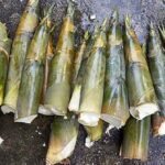 बांबू ची भाजी व लोणचे ( शिंद )